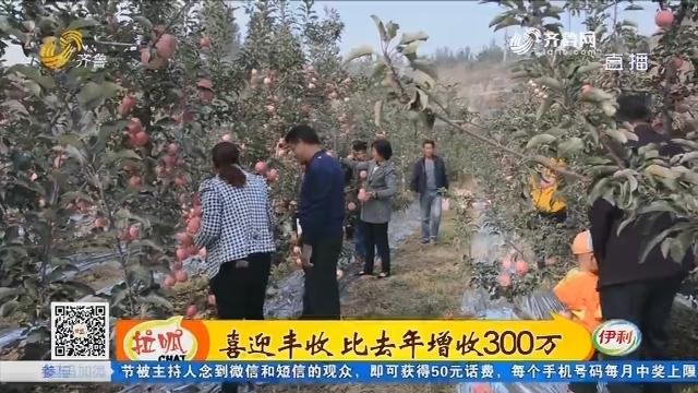 莱芜:喜迎丰收 比去年增收300万