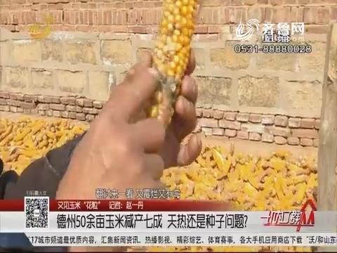 """【又见玉米""""花粒""""】德州50余亩玉米减产七成 天热还是种子问题?"""