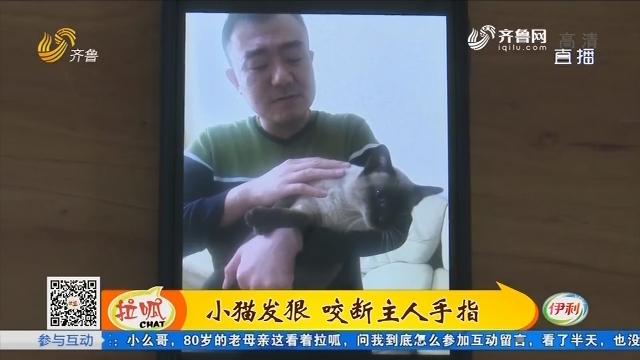 淄博:小猫发狠 咬断主人手指