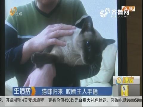 淄博:猫咪归来 咬断主人手指