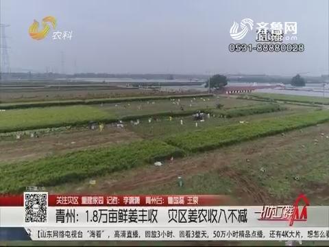 【关注灾区 重建家园】青州:1.8万亩鲜姜丰收 灾区姜农收入不减
