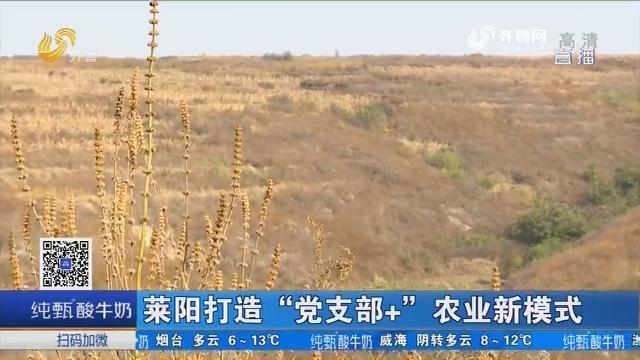 """莱阳打造""""党支部+"""" 农业新模式"""