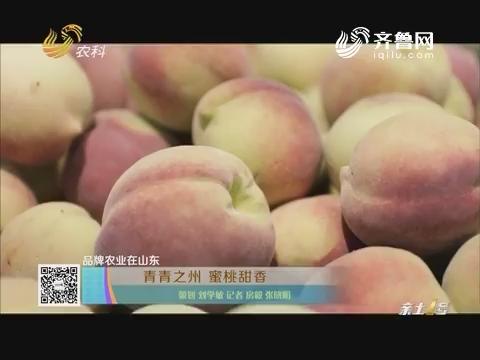 品牌农业在山东:青青之州 蜜桃甜香