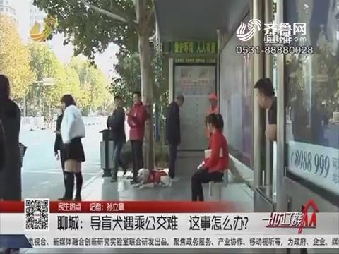 【民生热点】聊城:导盲犬遇乘公交难 这事怎么办?