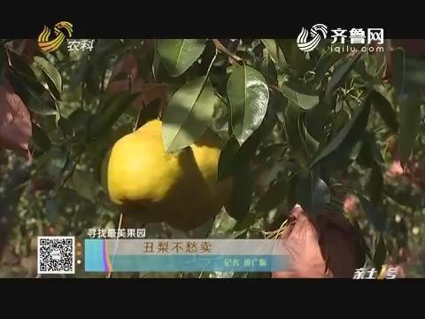 【寻找最美果园】丑梨不愁卖