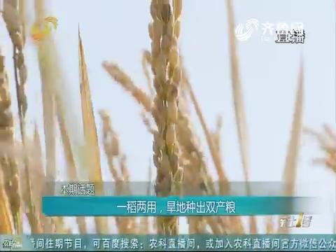 20181104《农科直播间》:一稻两用,旱地种出双产粮