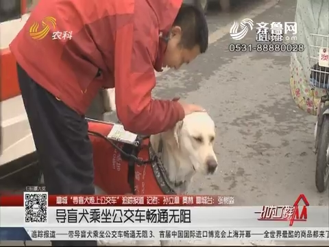 """【聊城""""导盲犬难上公交车""""追踪报道】导盲犬乘坐公交车畅通无阻"""