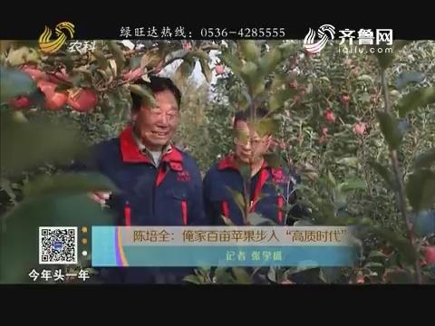 """陈培全:俺家百亩苹果步入""""高质时代"""""""