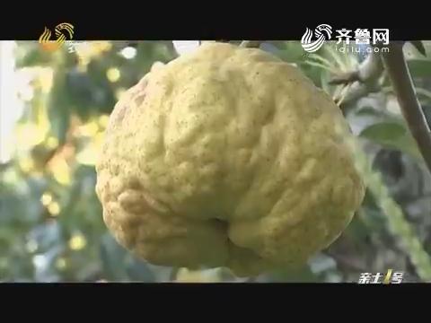 水果老板爱上丑梨