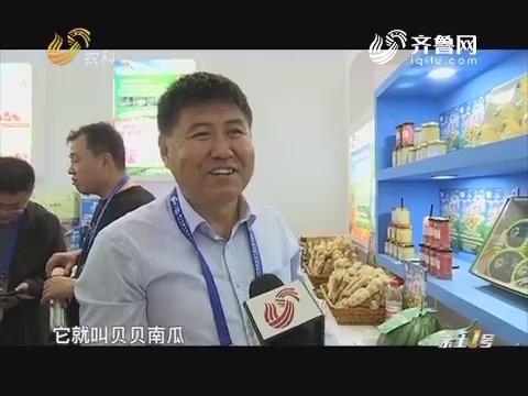 """【聚焦第十六届中国国际农产品交易会】南瓜中的""""小不点"""""""