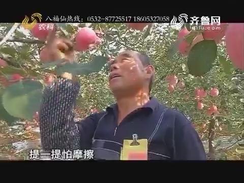用上八福仙 苹果吃海鲜