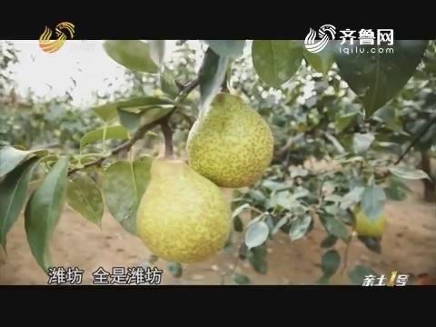 【品牌农业在山东】梨乡说梨