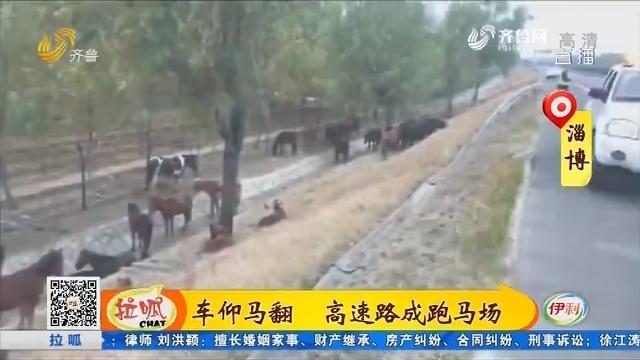 淄博:车仰马翻 高速路成跑马场