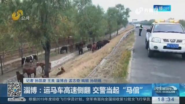 """淄博:运马车高速侧翻 交警当起""""马倌"""""""