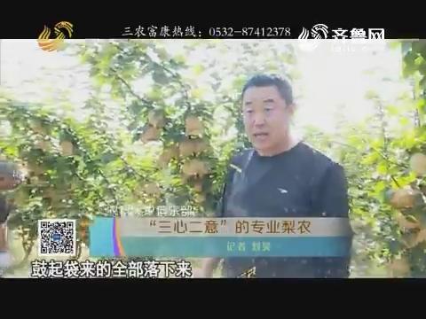 """【农科大户俱乐部】""""三心二意""""的专业梨农"""