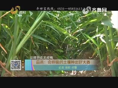 【品牌农资龙虎榜】昌邑:会呼吸的土壤种出好大姜