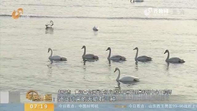 黄河三角洲国家级自然保护区迎来13万只候鸟栖息越冬