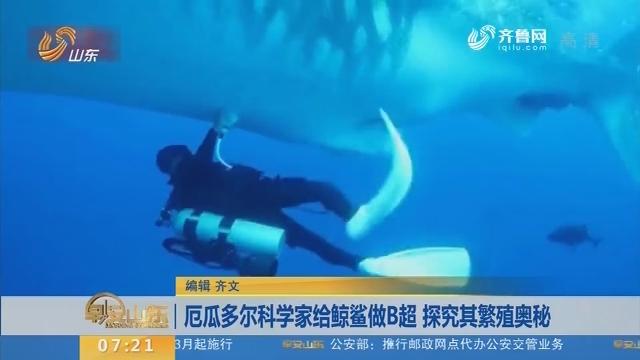 厄瓜多尔科学家给鲸鲨做B超 探究其繁殖奥秘