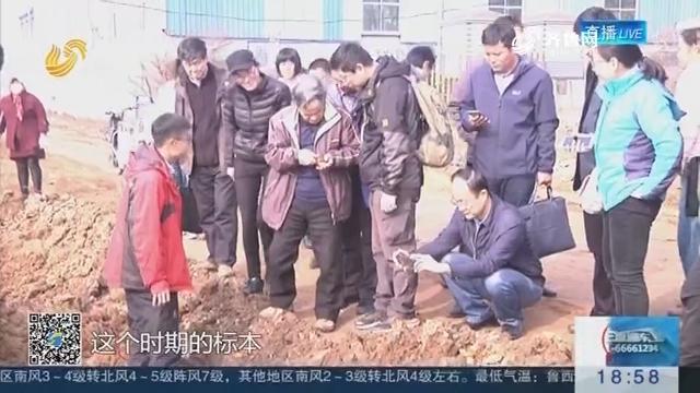 临沂凤凰岭现细石器的原生地层 属山东境内首次确定