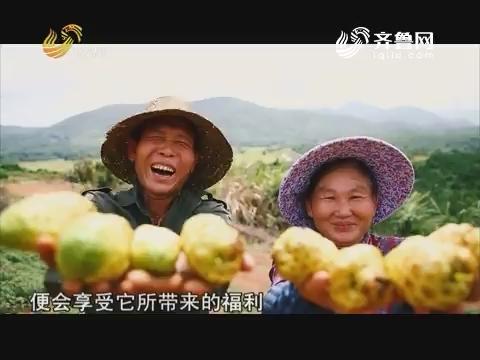 20181115《中国原产递》:诺丽果酵素