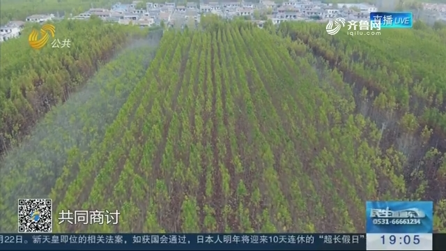 中国·任城花木博览会暨第十二届李营法桐节开幕
