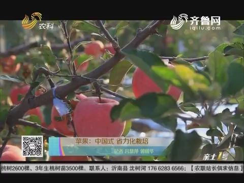 苹果:中国式 省力化栽培
