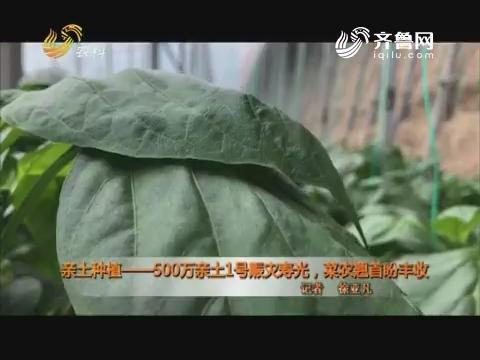 亲土种植——500万亲土1号赈灾寿光 菜农翘首盼丰收