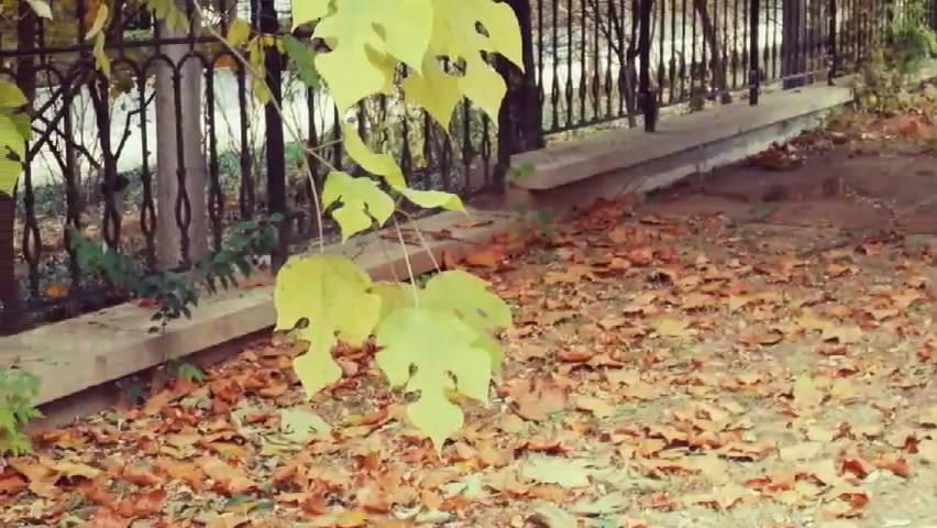 音画小视频:《片片枫叶情》