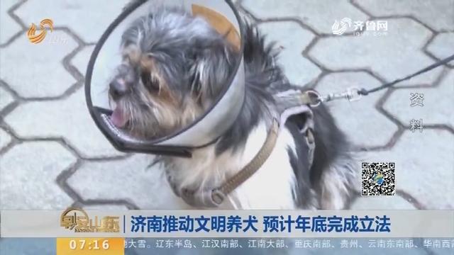 【闪电新闻排行榜】济南推动文明养犬 预计年底完成立法