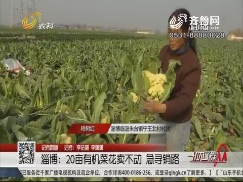 【记者跑腿】淄博:20亩有机菜花卖不动 急寻销路