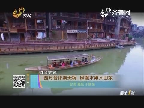 【财政支农】四方合作架天桥 凤凰水果入山东