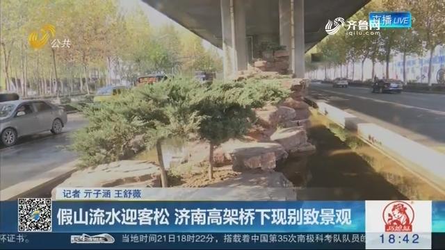 假山流水迎客松 济南高架桥下现别致景观