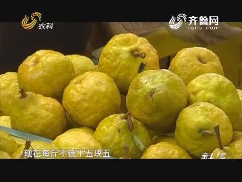 寻找最美果园:丑梨不愁卖
