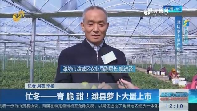 【闪电连线】忙冬——青 脆 甜!潍县萝卜大量上市
