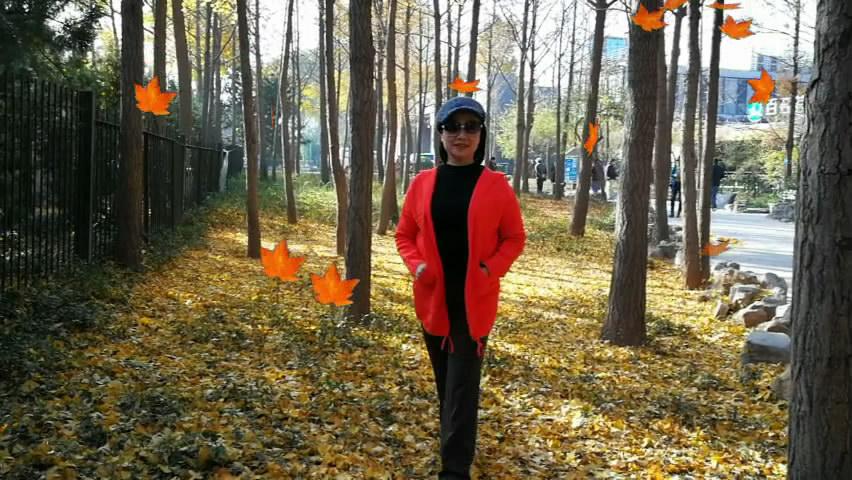 泉城公园美景:《枫叶如歌》