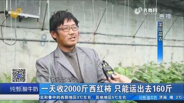 莱阳:蔬菜丰收却运不出去 菜农心里急