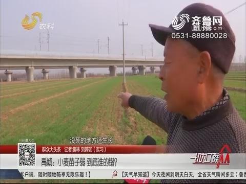 【群众大头条】禹城:小麦苗子弱 到底谁的错?