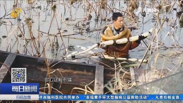 省农科院:插上科技翅膀 助推乡村振兴