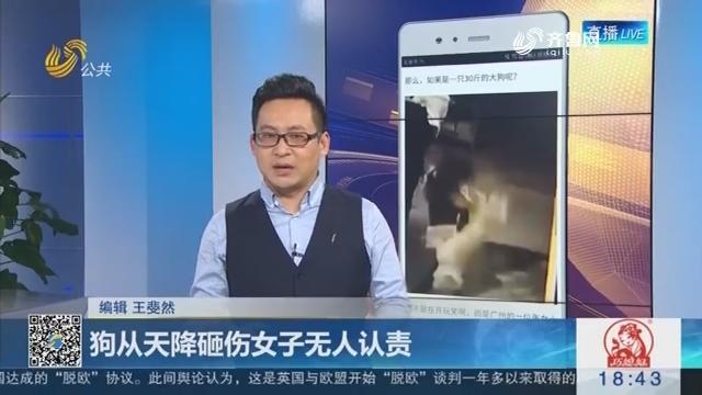 【新说法】狗从天降砸伤女子无人认责