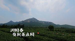 茶人的故事(一)