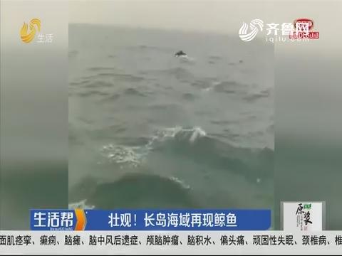 壮观!长岛海域再现鲸鱼