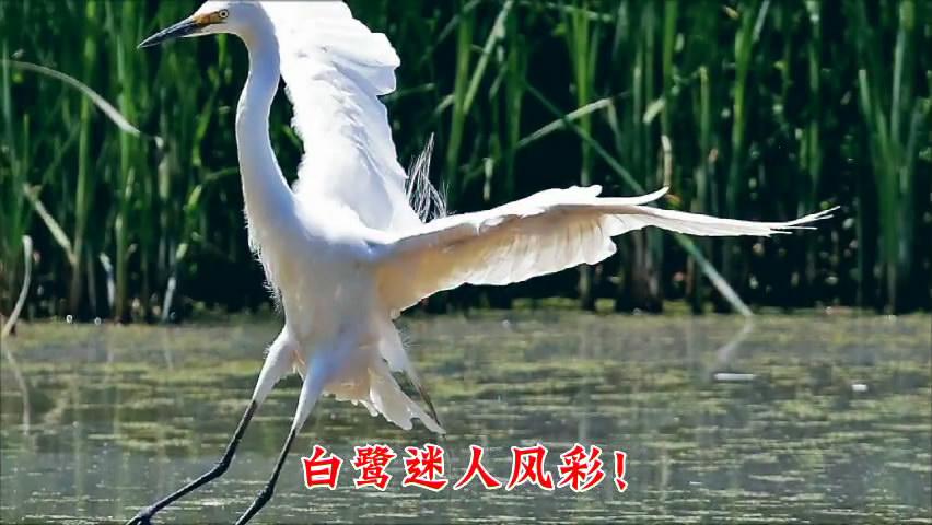 李之月摄影:《走近小白鹭》