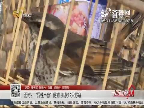 """淄博:""""异性声音""""诱捕 抓获19只野鸟"""