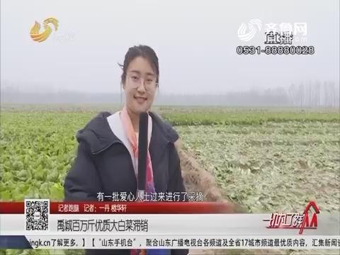 【记者跑腿】禹城百万斤优质大白菜滞销