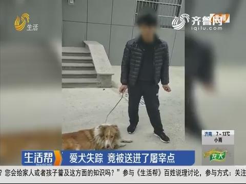 烟台:爱犬失踪 竟被送进了屠宰点