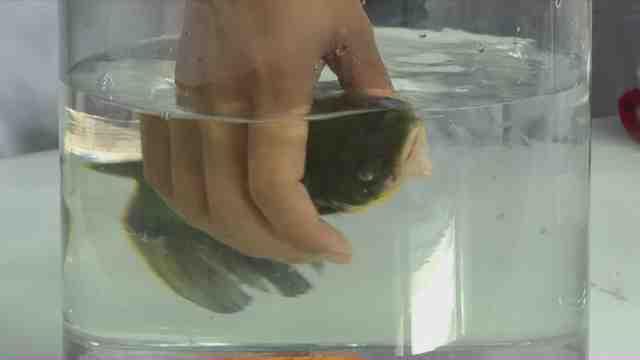 """《民生实验室》:一个神奇的实验:冻僵小鱼 """"死""""而复生?千万别眨眼!"""