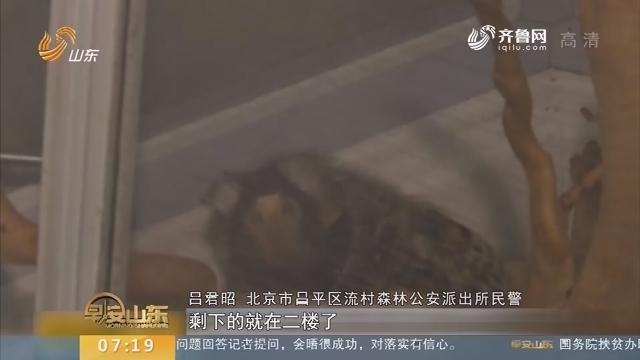 """【闪电新闻排行榜】居民酷爱动物 私自将楼顶建成""""动物园"""""""