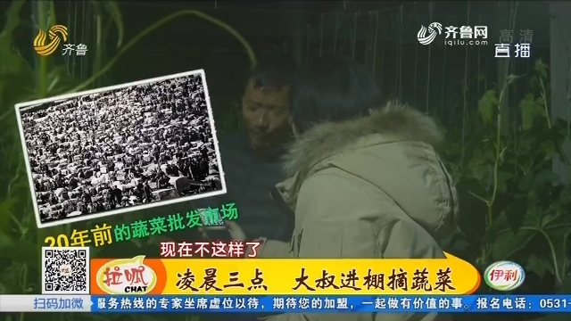 【照片背后的故事】寿光:凌晨三点 大叔进棚摘蔬菜
