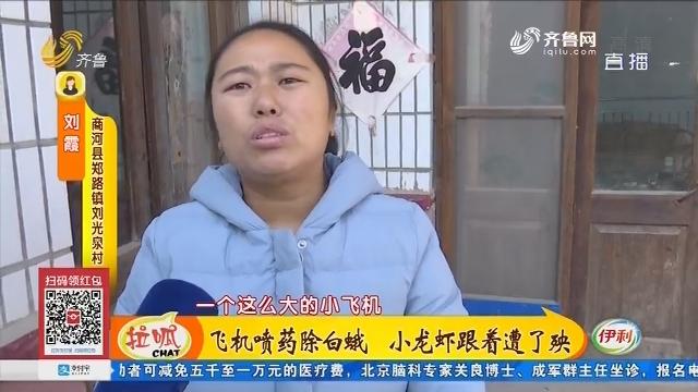济南:飞机喷药除白蛾 小龙虾跟着遭了殃