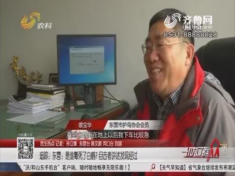 【民生热点】追踪 东营:是谁毒死了白鹤?目击者讲述发现经过